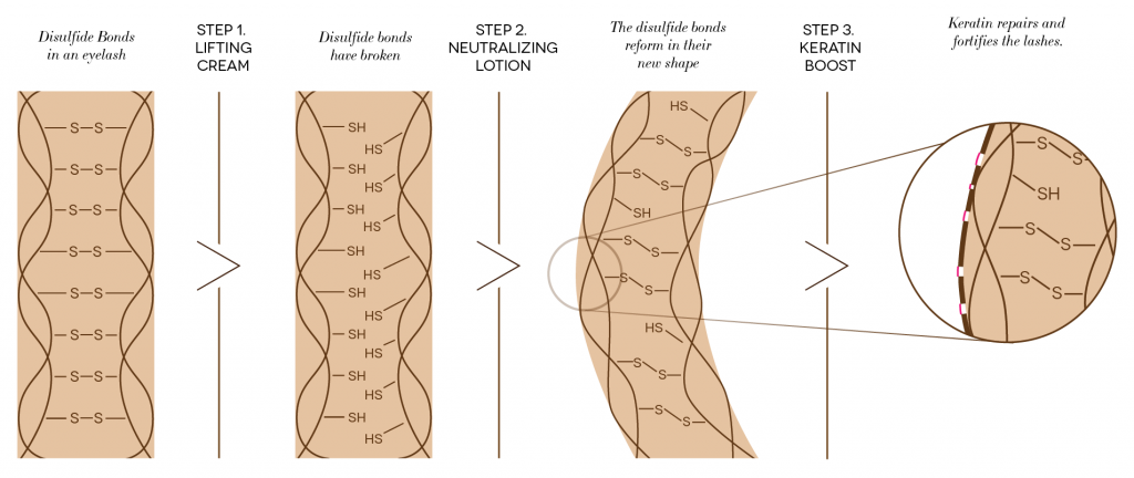 The steps of the lash lift, visually defined. Starting on L with the disulfide bonds in a lash, then step 1 - lifting cream. The disulfide bonds are broken, then step 2 - neutralizing lotion. The disulfide bonds reshape to the silicone pad then step 3 - keratin boost, which fixes any damage to the hair.